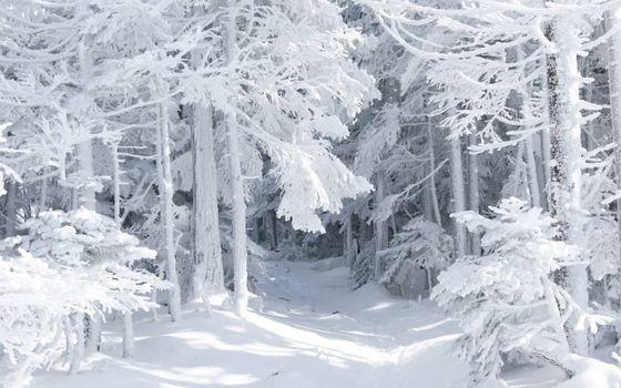 Фото бесплатно зимний лес, деревья, снег, снежный покров, тропинка, день, зима, природа