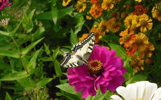 Photo free butterfly, flowers, nectar