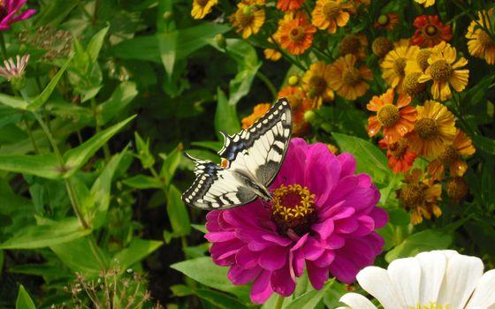 Фото бесплатно бабочка, цветы, нектар