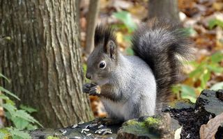 Photo free squirrel, tail, wool