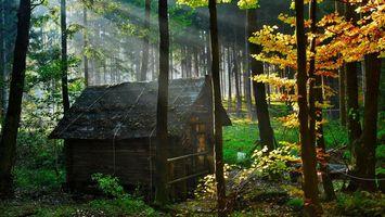 Фото бесплатно лес, деревья, избушка