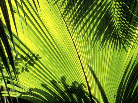 Фото бесплатно зеленый, тень, большой