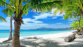 Бесплатные фото пальмы,деревья,море,океан,юг,тепло,песок