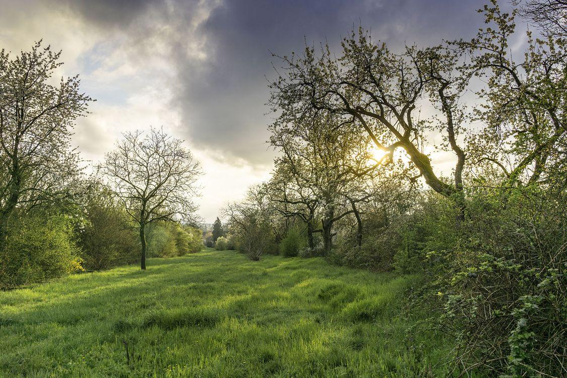 Фото бесплатно После дождя, недалеко от Гейдельберга в Германии, закат, поле, деревья, пейзаж, пейзажи