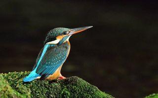 Бесплатные фото птичка,одна штука,всё,птицы