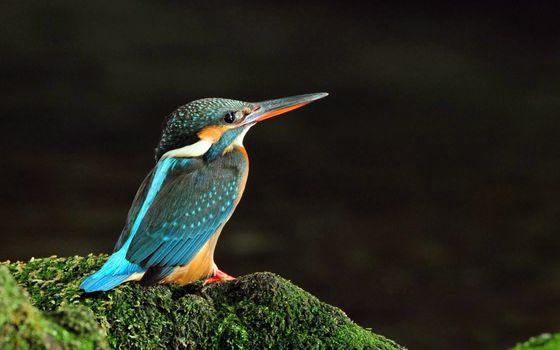 Фото бесплатно птичка, одна штука, всё