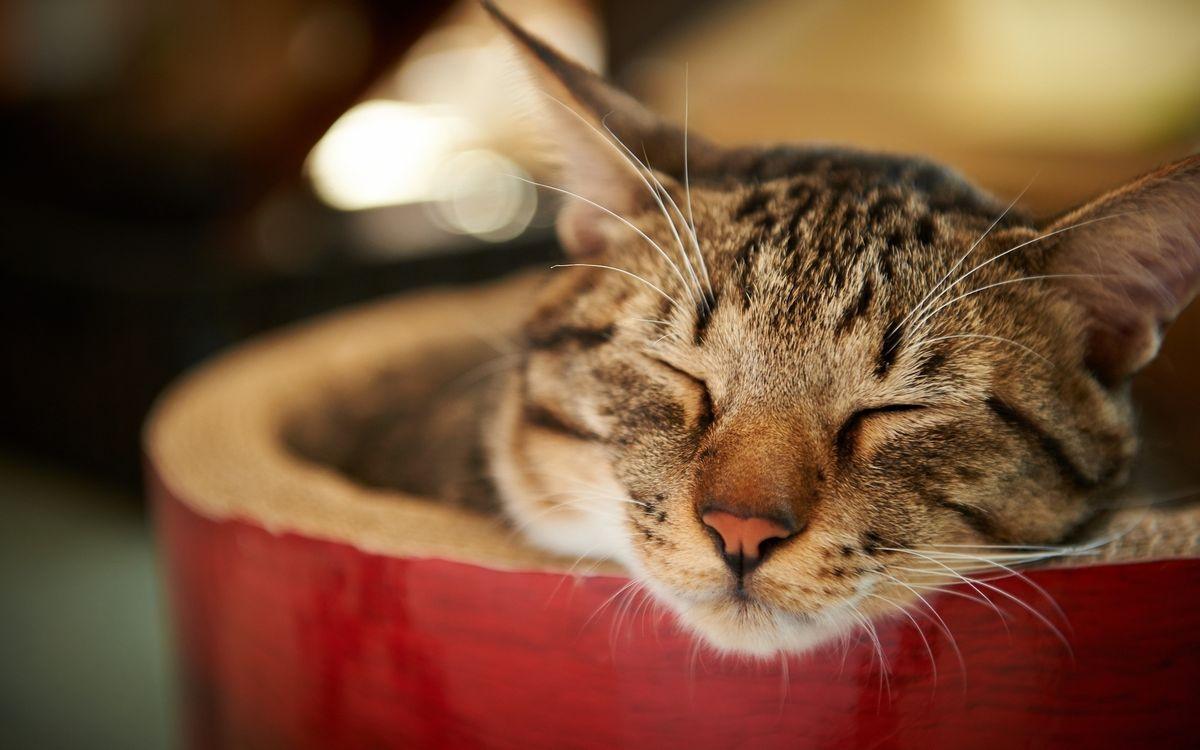 Фото бесплатно спит, морда, уши - на рабочий стол