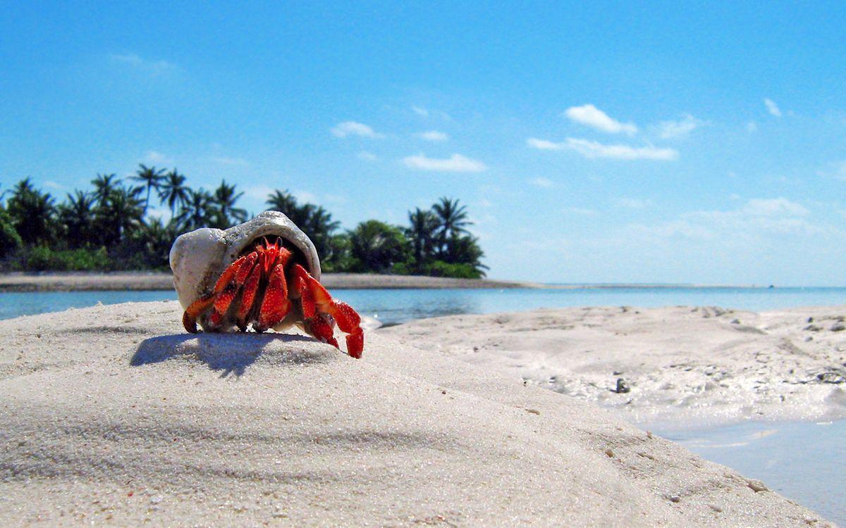 Фото бесплатно тропики, море, остров, песок, краб, разное, разное