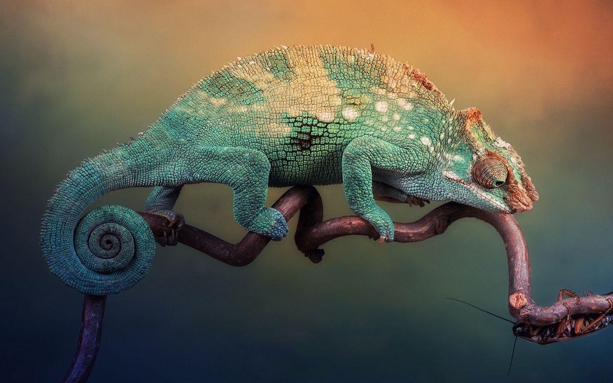 Фото цвет язык дерево - бесплатные картинки на Fonwall