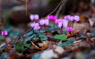 Фото бесплатно цветки, бутоны, лес