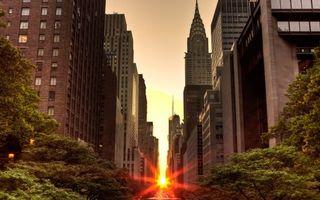 Фото бесплатно улица, деревья, дома, небоскребы, окна, солнце, город