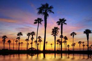Бесплатные фото вода,пальмы,деревья,закат,небо,облака,берег