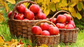 Заставки яблоки, красные, фрукты, корзины, трава, листья, еда