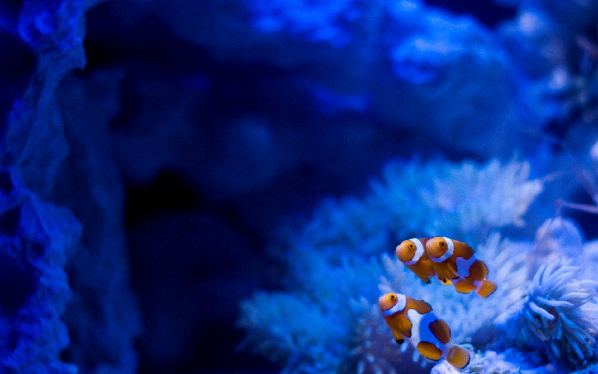 Картинки фото рыбки море океан рифы