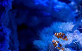 Фото бесплатно рыбки, море, океан