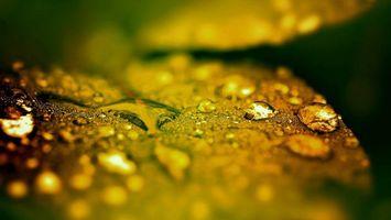 Бесплатные фото капли,после,дождя,лист,дерево,природа