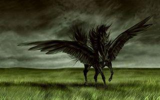 Заставки пегас, конь, крылья, черный, разное