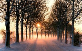 Фото бесплатно дорога, зима, деревья