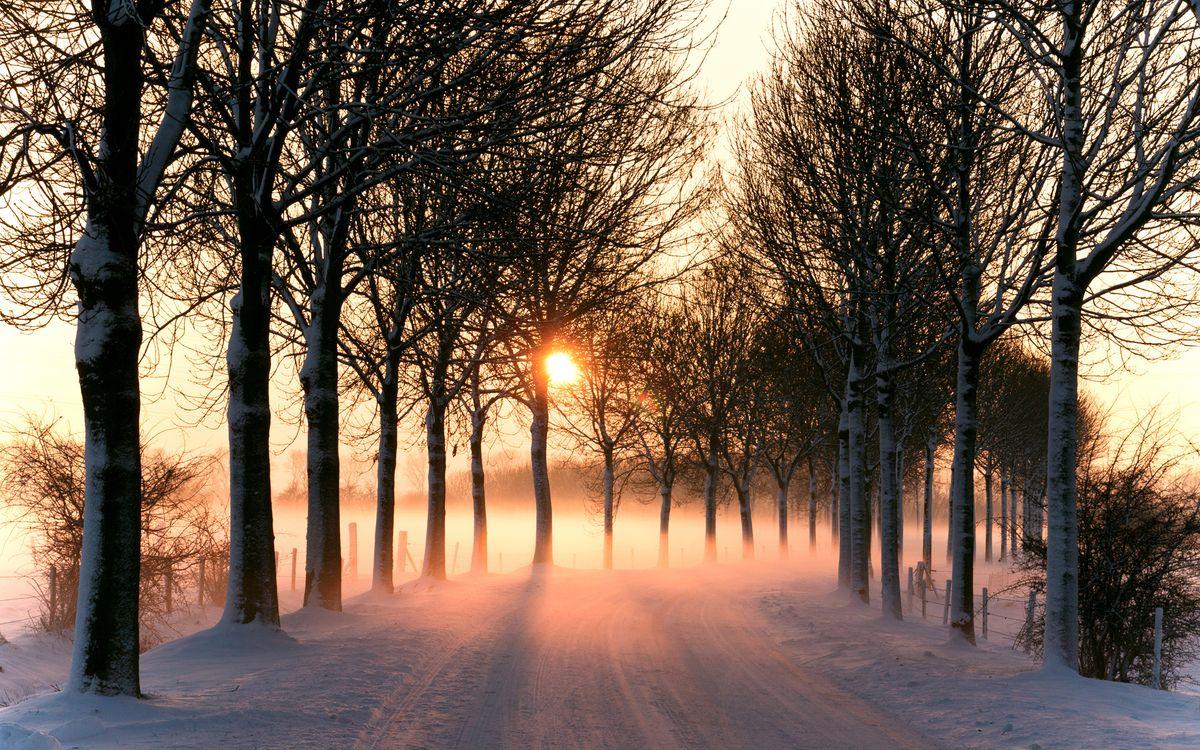 Фото бесплатно дорога, зима, деревья, снег, восход, солнце, оранжевое, природа, природа