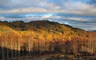 Заставки осень, вечер, закат, солнца, деревья, холм, пейзажи