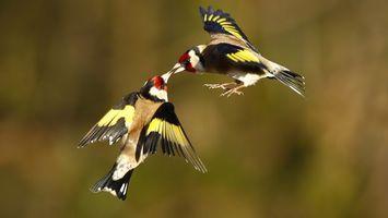 Бесплатные фото крылья,перья,клювы,хвосты,лапы,полет,птицы