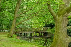 Бесплатные фото лес, деревья, парк, река, мост, пейзаж