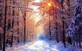 Бесплатные фото вечерний лес,сосновый бор,дорого,зима,следы машин,солнце,лучи света