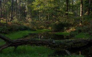 Бесплатные фото лес,река,озеро,вода,волны,елки,сосны