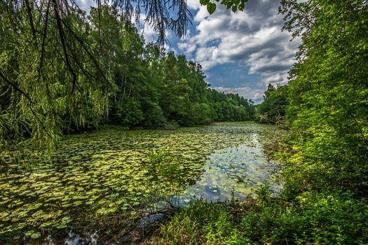 Фото бесплатно лето, пруд, лес