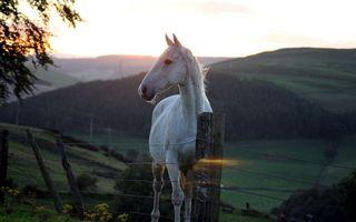 Обои лошадь, белая, забор, ограждение, холмы, пейзаж, животные