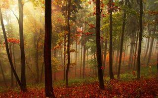 Фото бесплатно осень, лес, деревья, листва, трава, солнце, природа