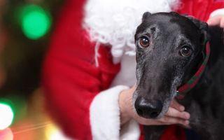 Бесплатные фото пес,щенок,шерсть,порода,ошейник,уши,нос