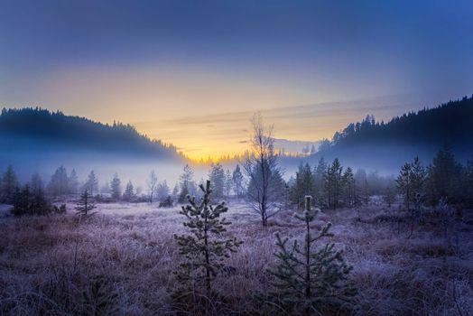 Фото бесплатно пейзаж, деревья, туман