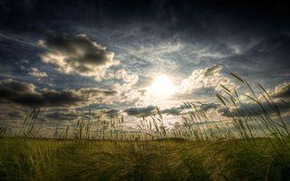 Фото бесплатно поле, колосья, зерно