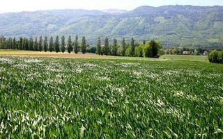 Бесплатные фото поле,трава,урожай,горы,небо,вид,деревья