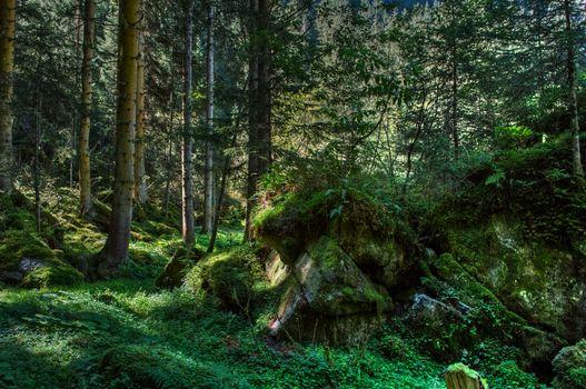 Фото бесплатно лето, через лес, природа