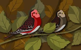 Заставки птички, перья, крылья