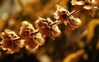 Бесплатные фото растение, ветка, бутоны, свет, солнце, цветки, коричневые
