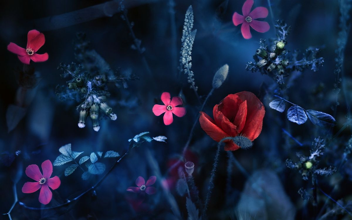 Фото бесплатно растения, лепестки, зелень, листья, стебель, темнота, цветы, цветы