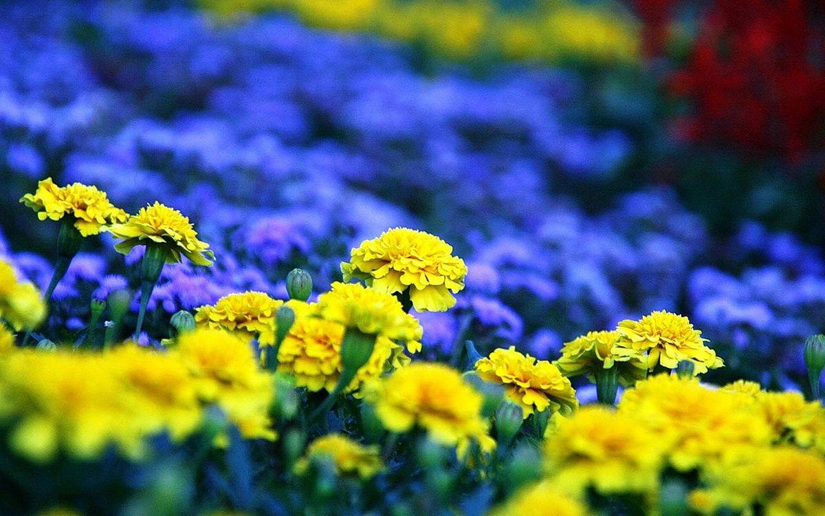 Фото бесплатно разные, желтые, синие, лепестки, стебли, зеленые, цветы, цветы