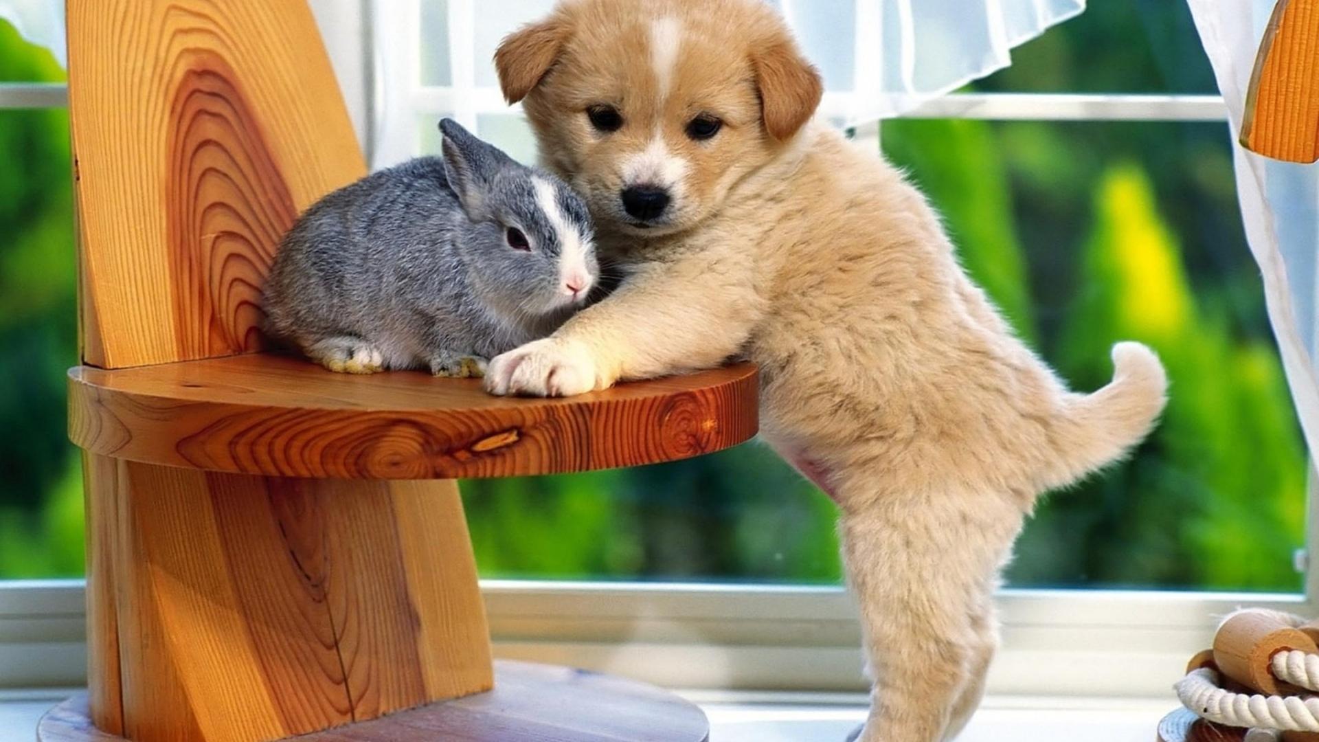 щенок, кролик, заяц