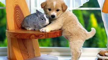 Фото бесплатно щенок, кролик, заяц