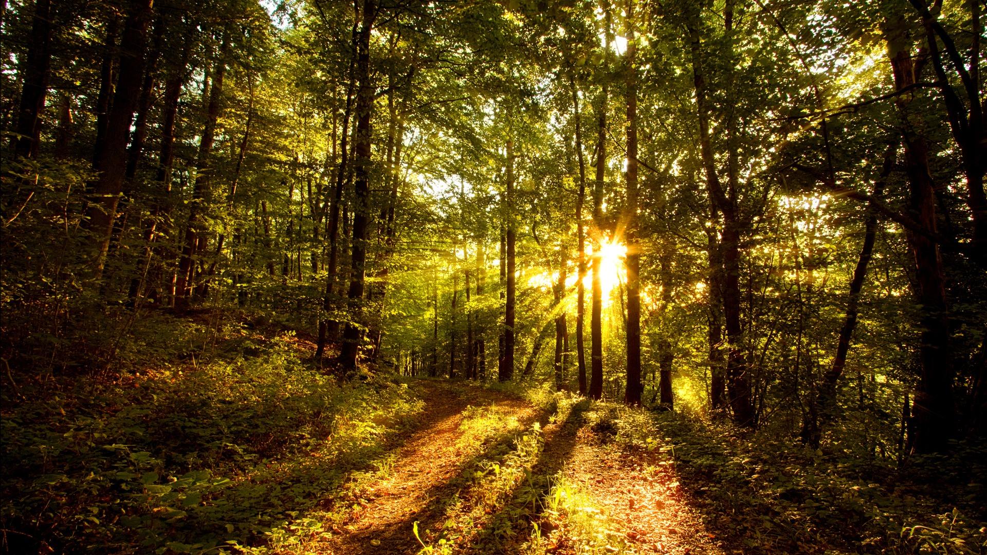 Обои тропа, лес, деревья, солнце