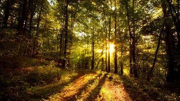 Бесплатные фото тропа,лес,деревья,солнце,трава,листья,кроны