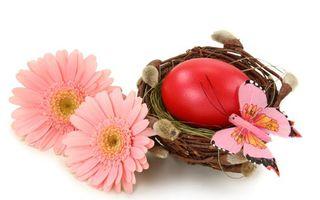 Обои цветки, герберы, гнездо, котики, ветка, лоза, яйцо, цветы