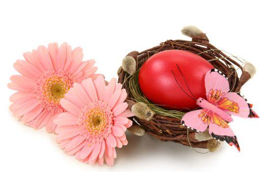 Бесплатные фото цветки,герберы,гнездо,котики,ветка,лоза,яйцо,цветы