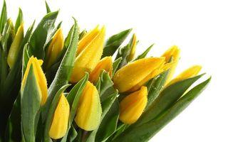 Бесплатные фото тюльпаны, букет, лепестки, желтые, цветы