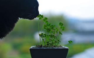 Бесплатные фото черный,нюхает,растение,цветы,кот,зеленое,нос