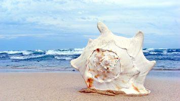 Заставки ракушка, на берегу, море