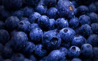 Бесплатные фото черника,ягода,лесная,еда